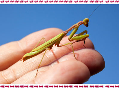 insectes vivant dans la terre