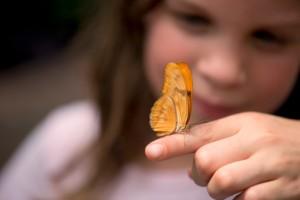 papillon-animatrice