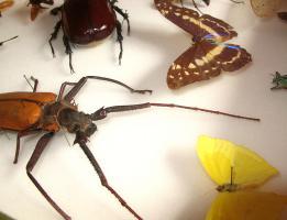 Insectes tropicaux