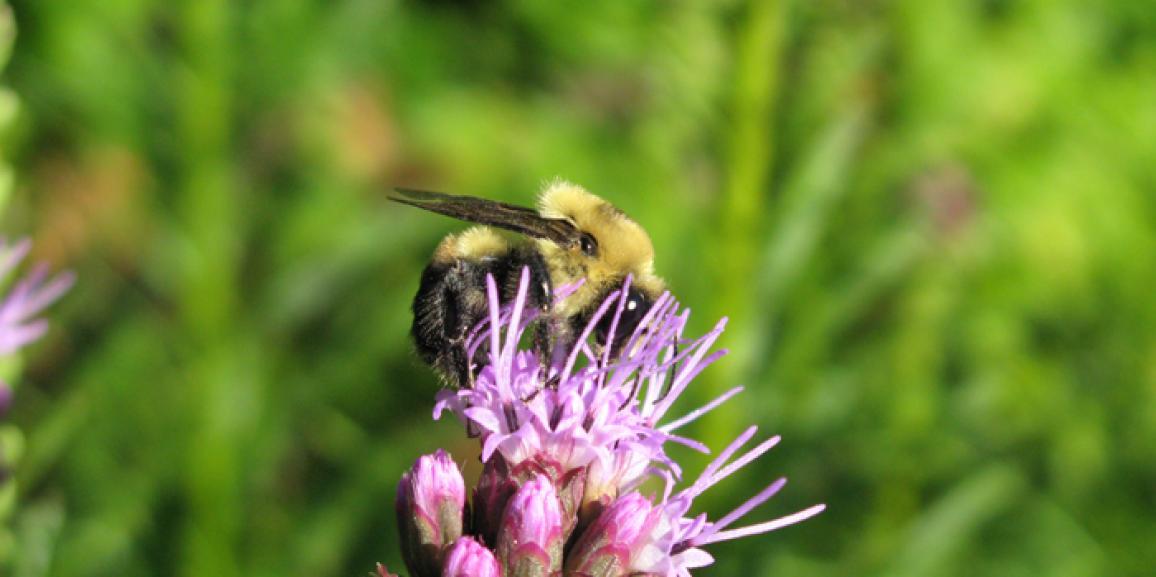 Journée de l'écologie: Insectambulant sera de la partie!