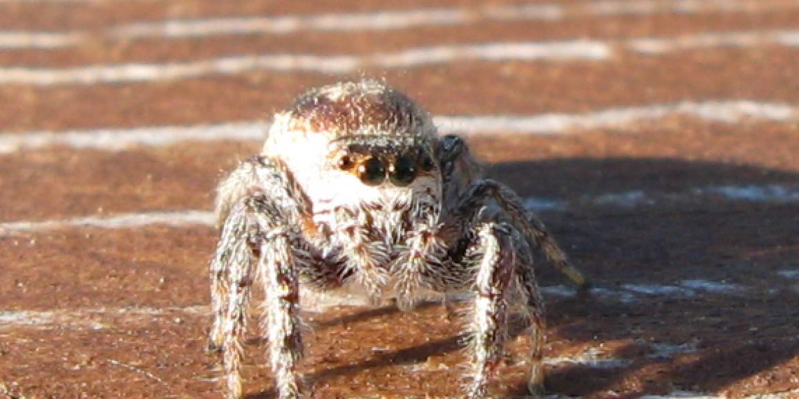 Insectambulant parlera d'araignées à la bibliothèque Dorval